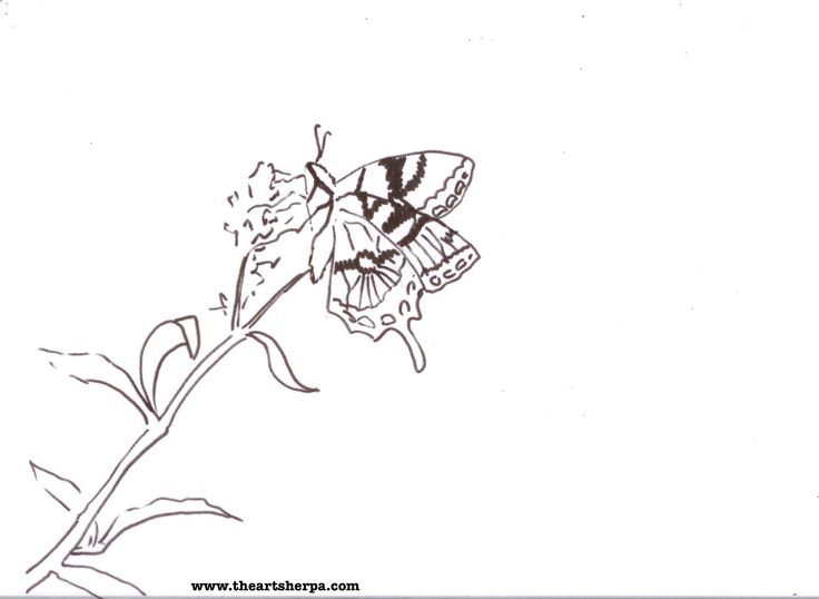Drawn pot plant traceable Art Templates Traceable's sherpa butterfly