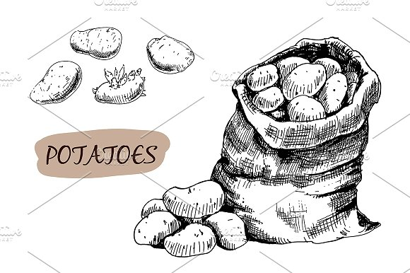 Drawn potato Potatoes on drawn Hand Creative