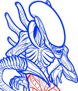 Drawn predator easy Draw How by how an