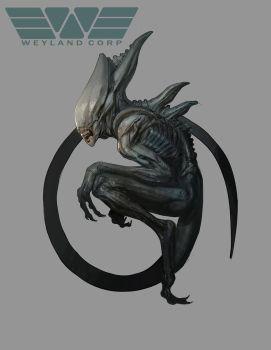 Drawn predator shadow dragon  Alien Predator HR on