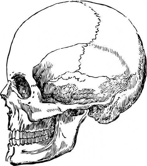 Drawn predator skull Head human drawing Clip Skull