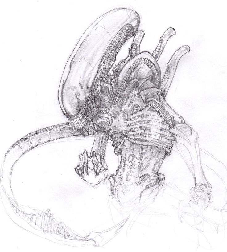 Drawn predator xenomorph Predator/Alien best victor by images