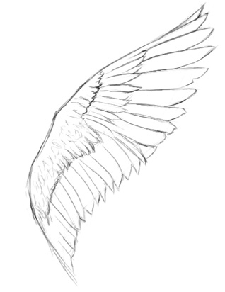 Drawn profile angel side Draw wings angel to How