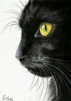 Drawn profile cat Inari and GATOS Ilustraciones Cat