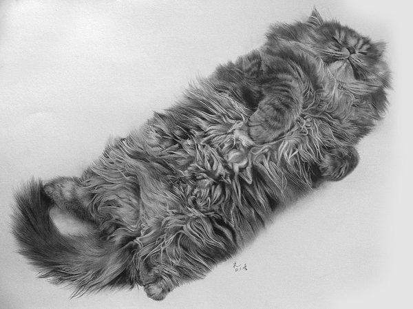 Drawn profile cat  pictures drawings won't 15