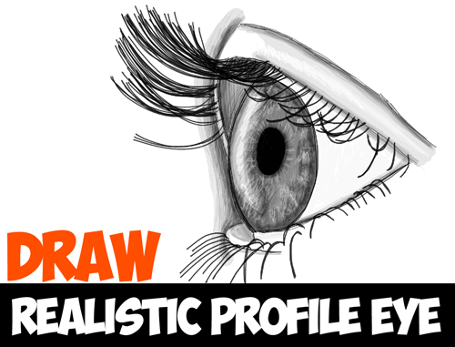 Drawn profile detailed – Draw Side Drawing from
