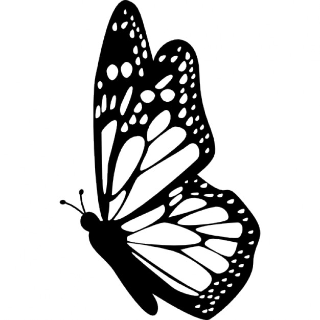 Drawn butterfly side view Free Icons side Butterfly wings