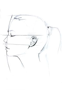 Drawn profile detailed Proportions for Drawing Beginner Ciuprina