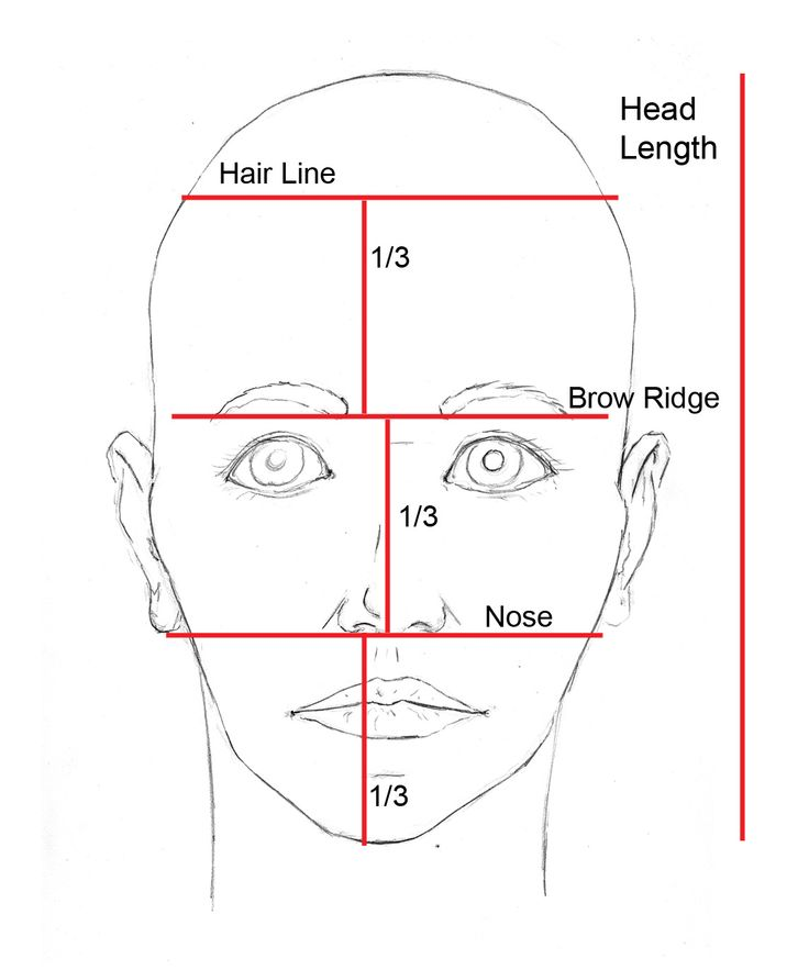 Drawn profile face proportion 25+ on proportions Face proportions