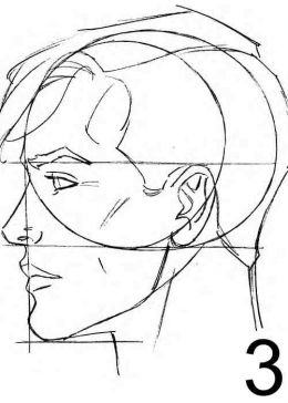 Drawn profile face proportion Face proportions  Male proportions