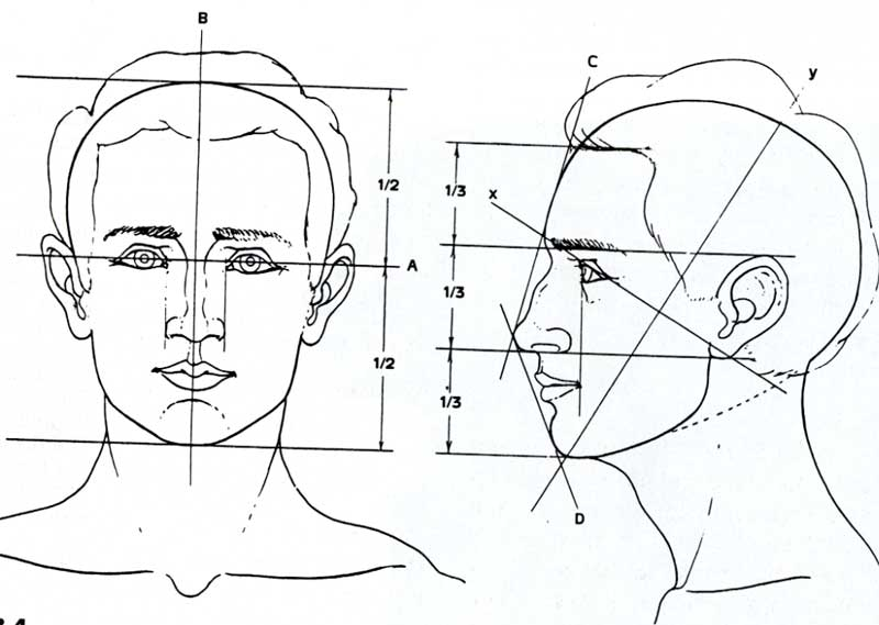 Drawn profile face proportion Proportions The drawing posts Related
