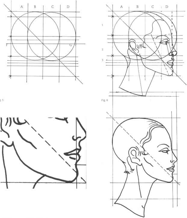 Drawn profile face proportion The structure Arts analysis Mouth
