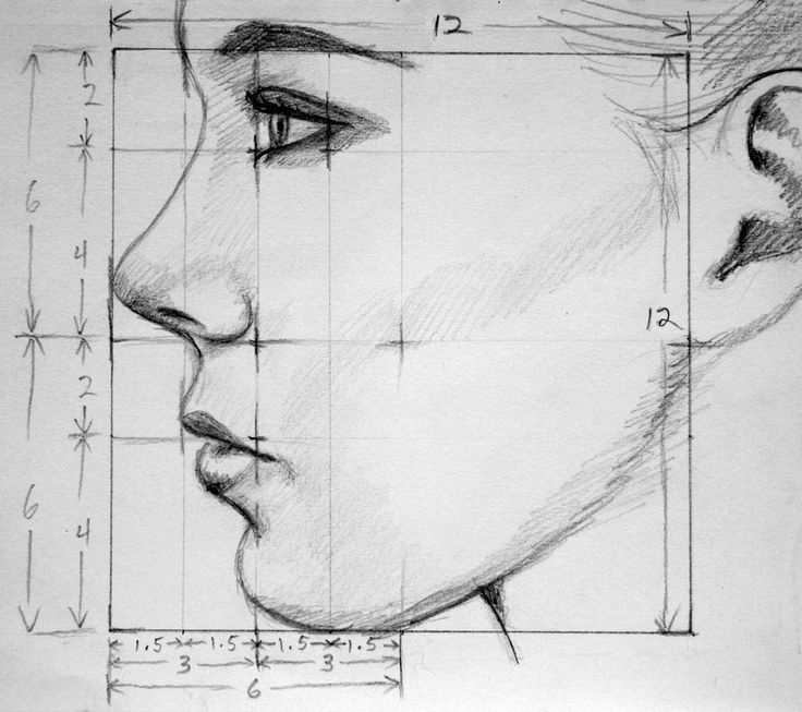 Drawn profile female face Created proportions a might ProportionsDrawing