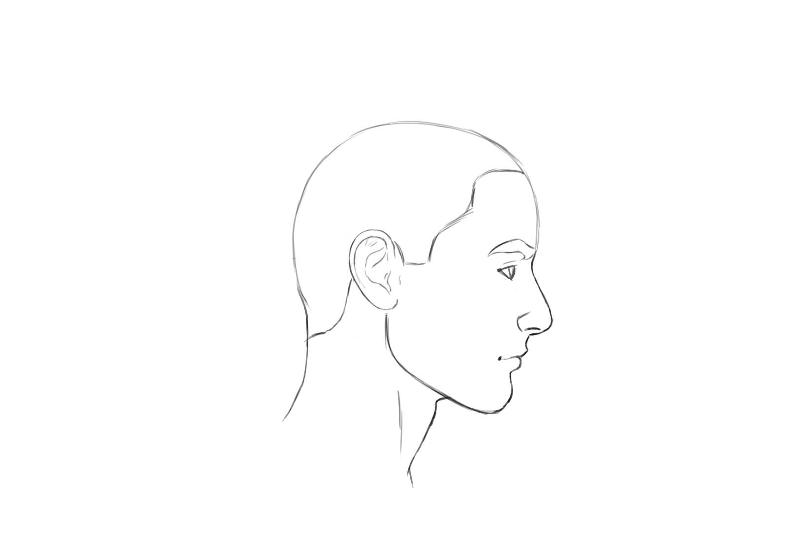 Drawn profile hairline : how Panos around Illustrator