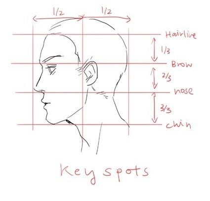Drawn profile hairline Drawing Resources Drawing Guide guide'