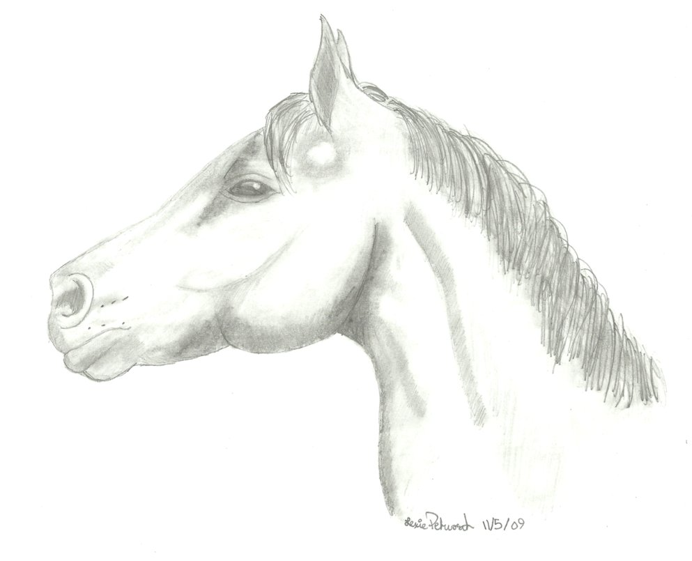 Drawn profile horse head Side Side by Horse Profile