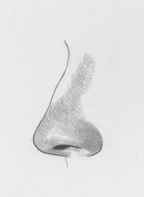 Drawn profile line shading The nose nose from draw