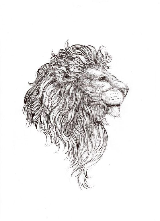 Drawn profile lion Drawing 25+ lion drawing lion