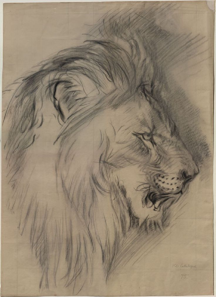 Drawn profile lion Best Arthur The Ruskin's 25+