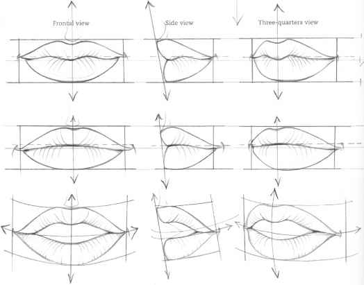 Drawn profile lip Analysis Drawing Martel Side Mouths