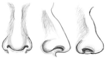 Drawn profile nose Ideas vincenzina and sito Drawings