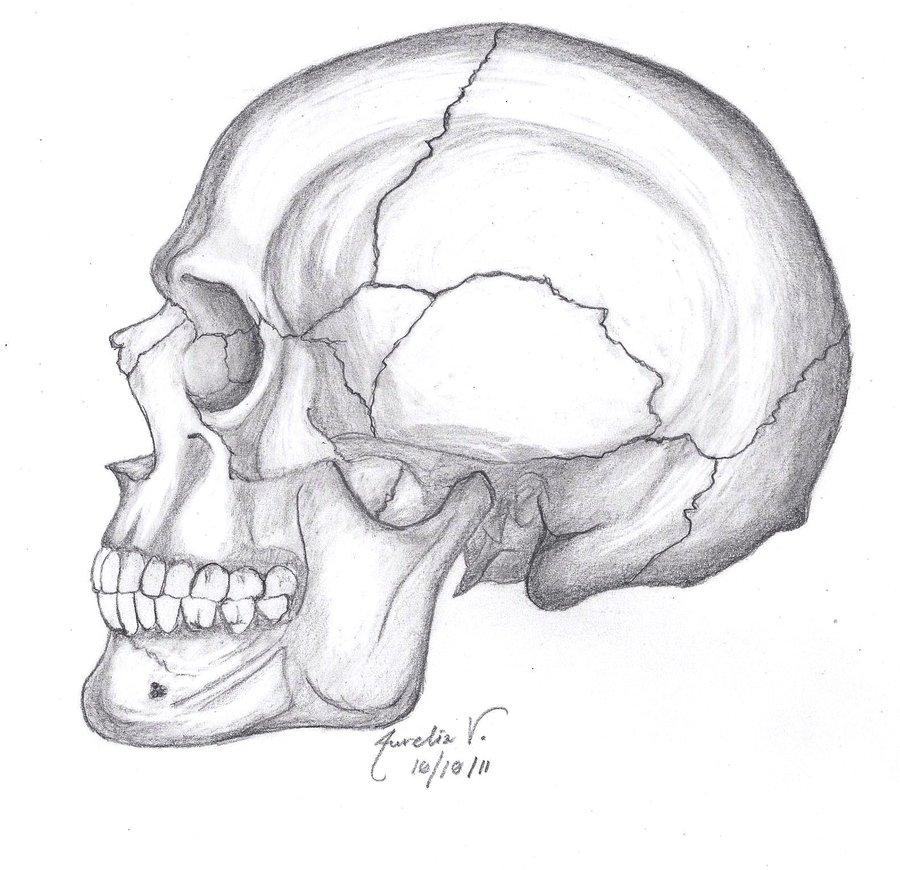 Drawn profile skull Google ideas drawing Drawing Pinterest