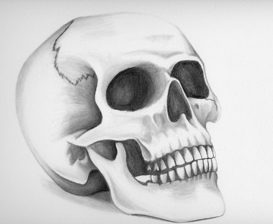 Drawn skull shaded — by Technical Xsore Illustration