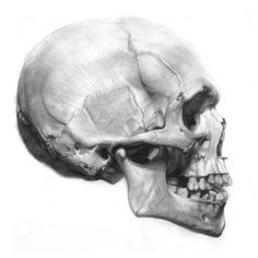 Drawn profile skull Drawing View View  by