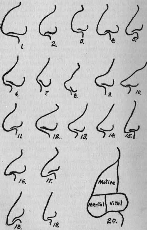 Drawn profile upturned nose Best Noses  Pinterest 26