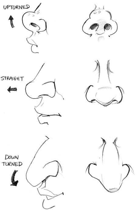 Drawn profile upturned nose Nose) septum the and Illustration