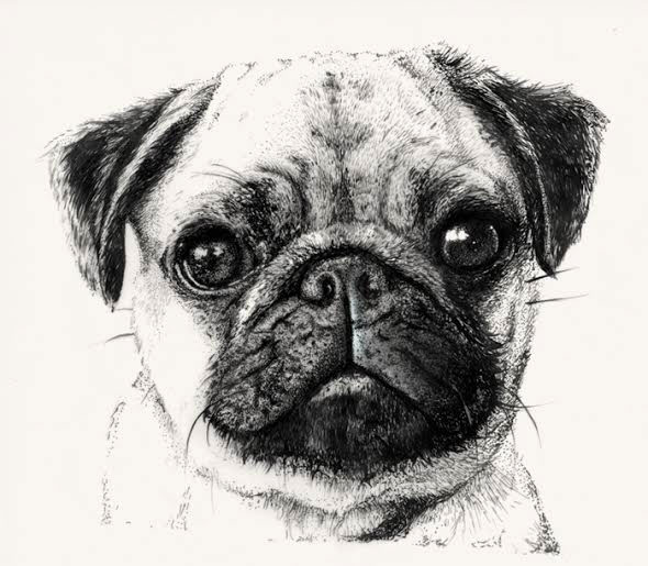 Drawn pug Patterns Behance drawn Hand WIP