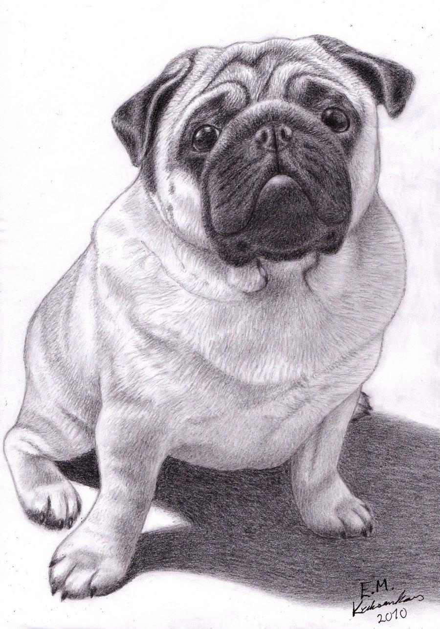 Drawn pug The Brucey Pug Elkenar by