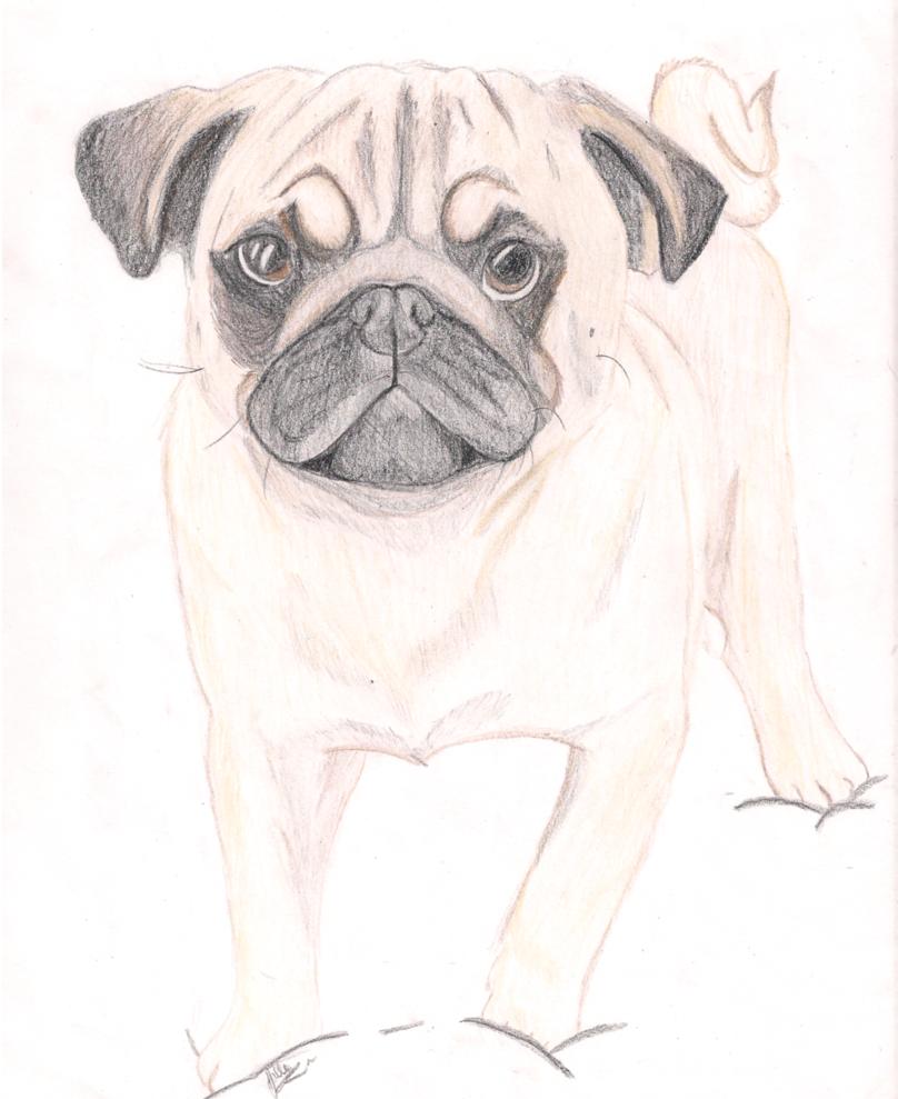 Drawn pug Drawing TheRainbowDalek TheRainbowDalek by Drawing