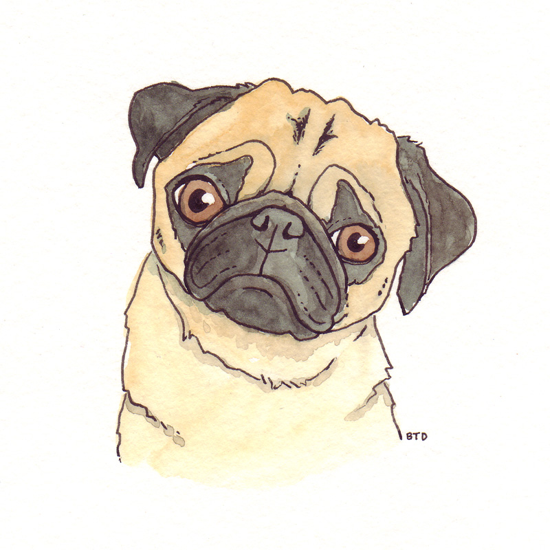 Drawn pug Uberzers найдено Яндекс pugs