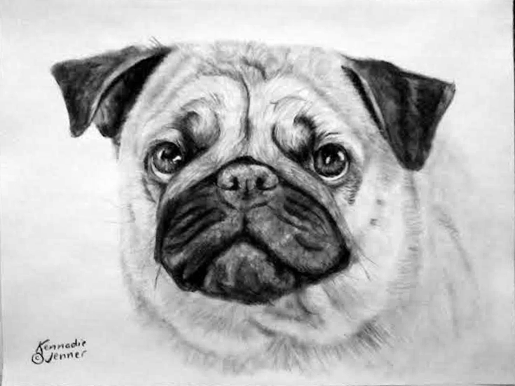 Drawn pug angry 22 Drawing Charcoal Pug 2017