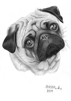 Drawn pug appa Pugly Ilustração deviantart Torsk1