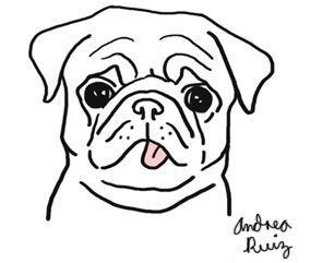 Drawn pug ashamed Pinterest result images / and