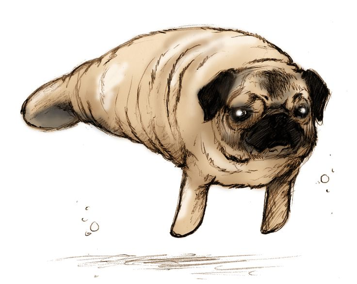 Drawn pug ashamed And love pugs on Cute