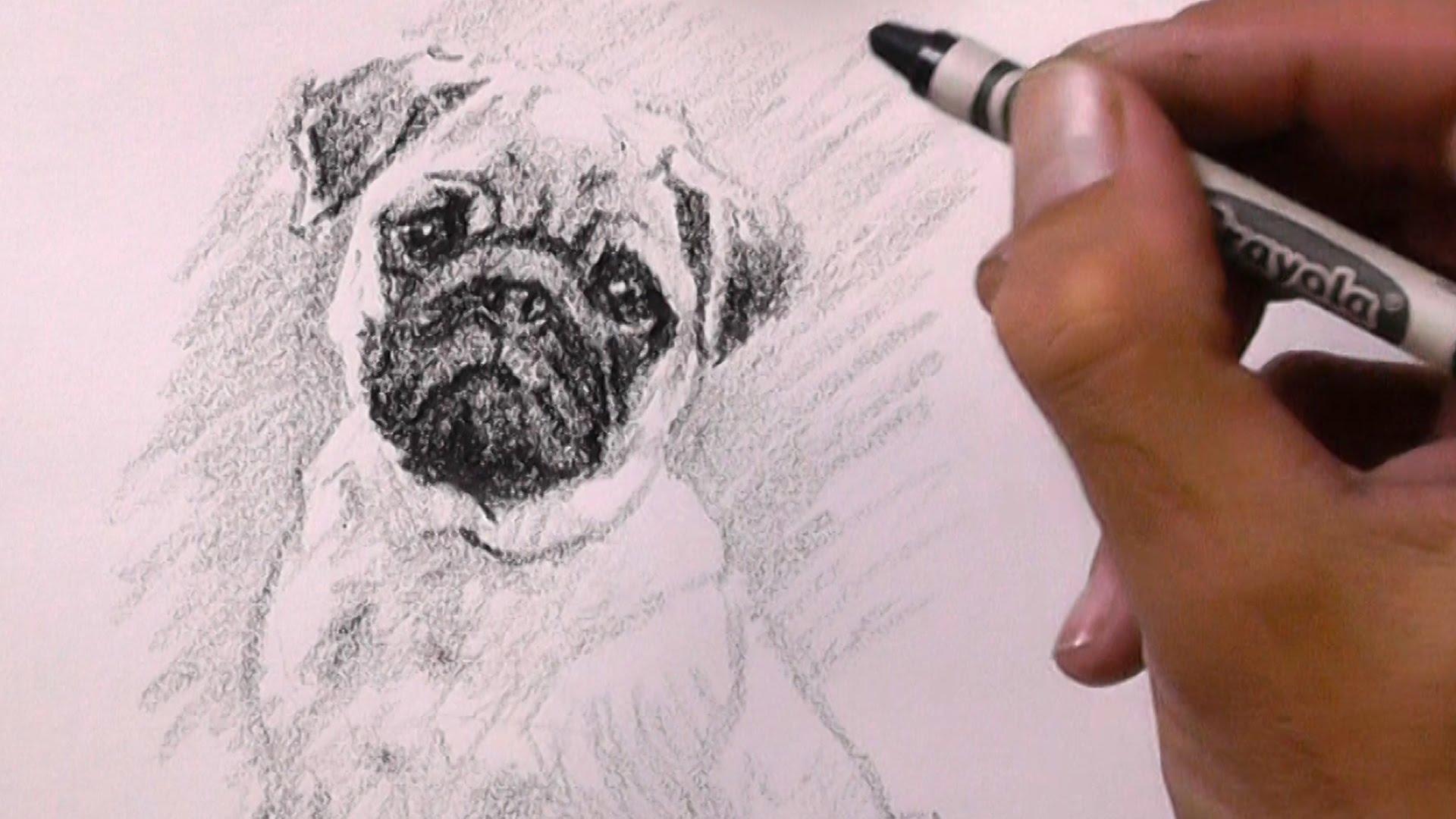 Drawn pug baby pug With Drawing YouTube Drawing Pug