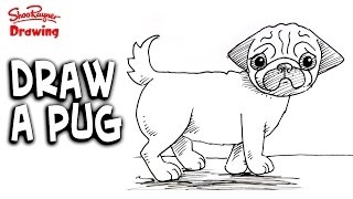 Drawn pug beginner For beginners Draw draw Easy