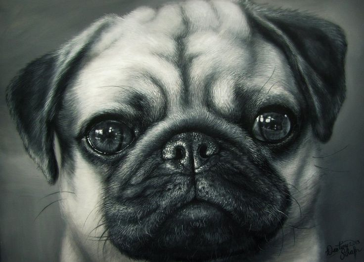 Drawn pug biro Best on images by Paintings