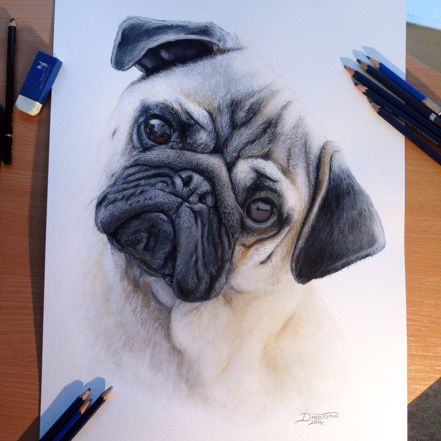 Drawn pug color The on Color around Drawing