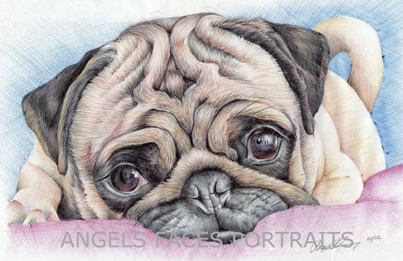 Drawn pug color Angelfaces1986 drawing DeviantArt colour THE