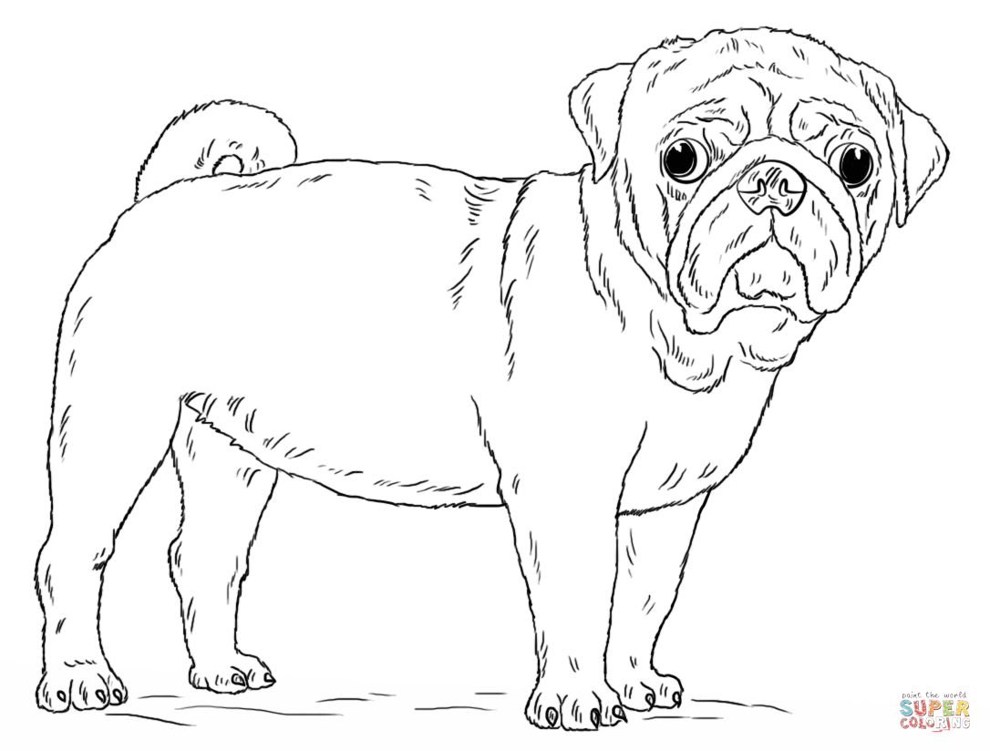 Drawn pug coloring page Page Coloring Dog coloring the