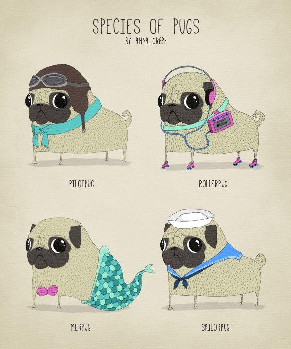 Drawn pug daily Pinterest Pug Anna Grape <3