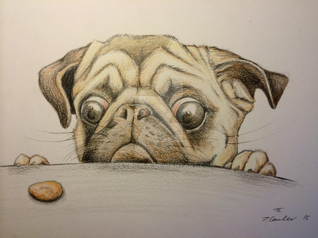 Drawn pug deviantart DeviantArt dog by Pug pencil