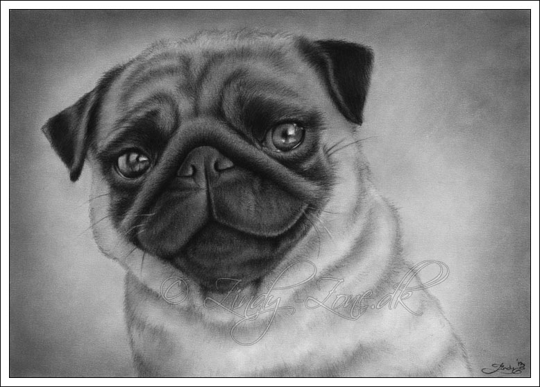 Drawn pug deviantart Zindy Pug Dog by Zindy
