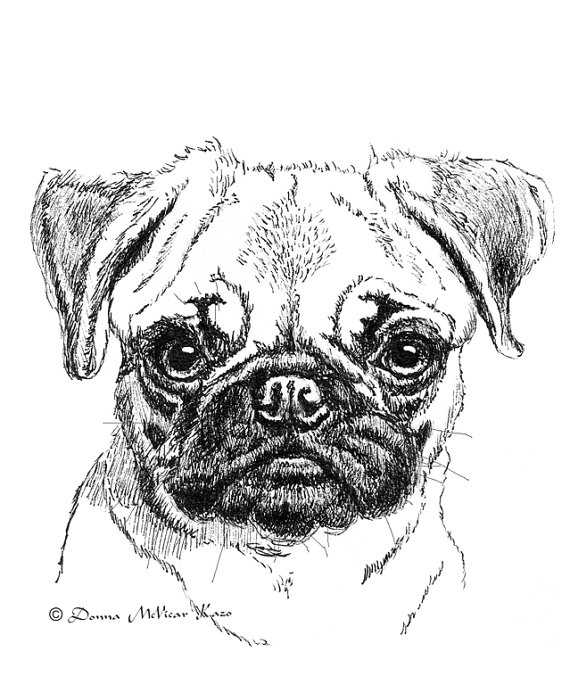 Drawn pug draw a Vada! Pug to Puppy somone