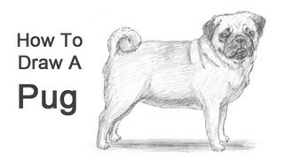 Drawn pug easy To How  a Dog