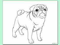 Drawn pug easy Pug  a Draw by
